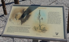 Desert Lily Sanctuary in the Chuckwalla Valley