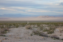 View of Mojave Trails National Monument